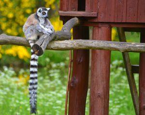 zoo Charlotta